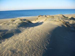 Dune di Capocotta
